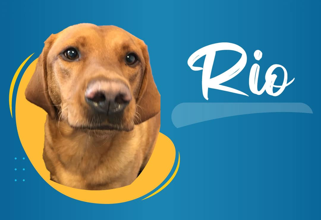 Rio – the office friend to everyone at Clingfoil